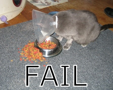 Kitty Fail
